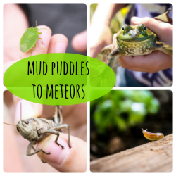 mud puddles button