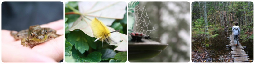 Everyday Nature Collage