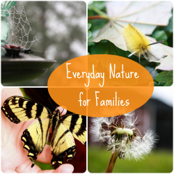 Everyday Nature button